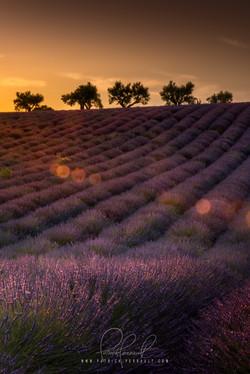 22- Provence