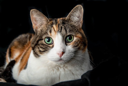 Precious aka: Fat Cat