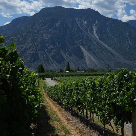 Reform is needed in the Canadian wine industry: here's why