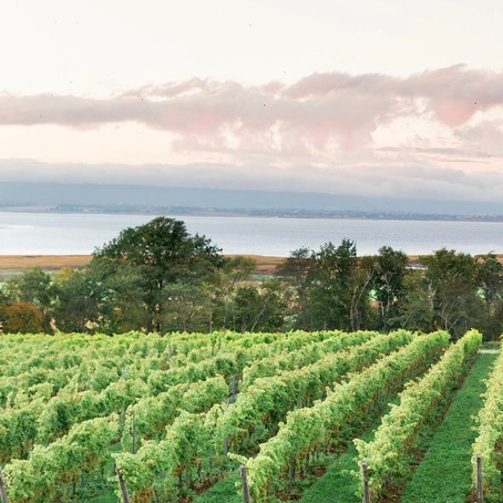 Lightfoot & Wolfville: Biodynamic Wine from Nova Scotia