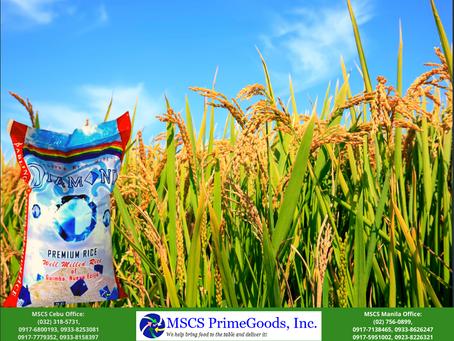Rice Supplier