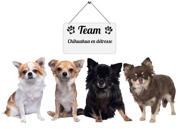 Team CED
