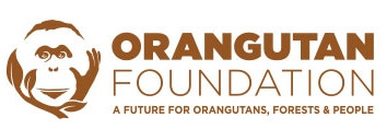 Charity Donation: The Orangutan Foundation