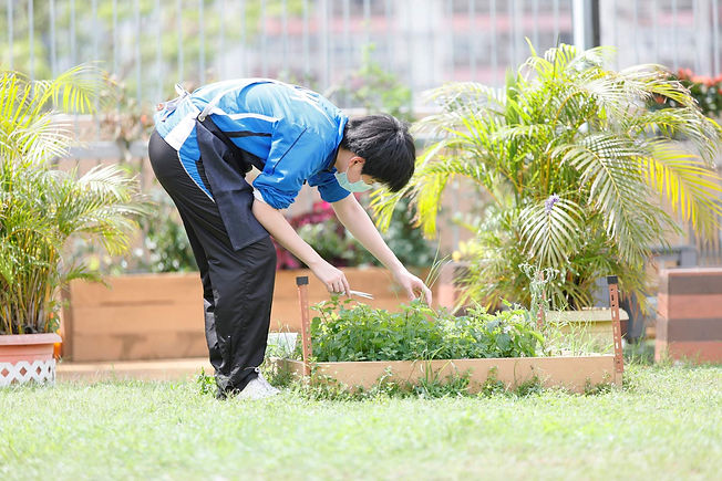 HorticulturalTheory