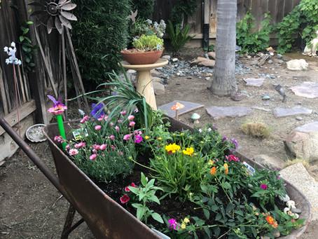 Beautiful Flowers in the Backyard by Joyce Imai