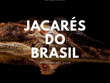 Jacarés do Brasil #1 - Melanosuchus niger