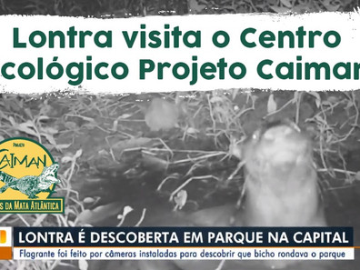 Lontra visita o Centro Ecológico Projeto Caiman