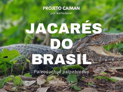 Jacarés dos Brasil #2 - Paleosuchus palpebrosus