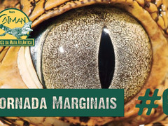 "O Jacaré-de-papo-amarelo - Jornada ""Marginais"" Cap.#6"