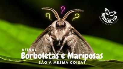 Borboletas e Mariposas: são a mesma coisa?