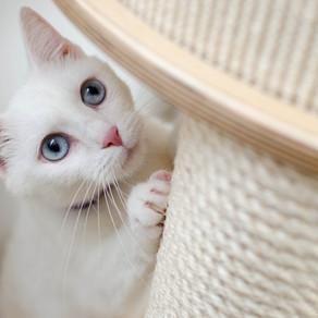 Kit básico para gatos