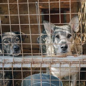 Covid-19 e a adoção de pets