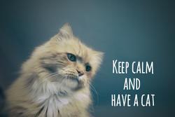 cat-1245963_1920_edited
