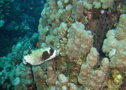 Unterwasser_Ägypten_(56).jpg