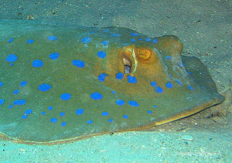 Unterwasser_Ägypten_(92).jpg
