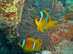 Unterwasser_Ägypten_(86).jpg