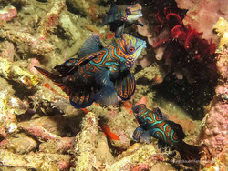 Sulawesi 037