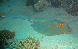 Unterwasser_Ägypten_(93).jpg