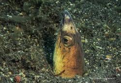 Sulawesi 062