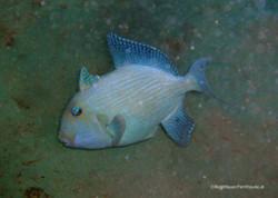 Unterwasser_Ägypten_(66).jpg