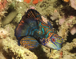 Sulawesi 039