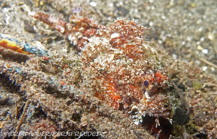 scorpionfish_5