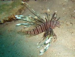 Unterwasser_Ägypten_(94).jpg
