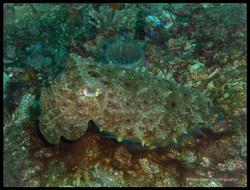 Sulawesi 028