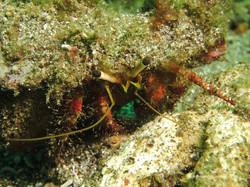 Sulawesi 134