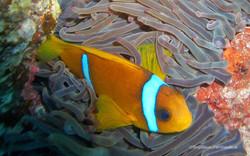 Unterwasser_Ägypten_(85).jpg