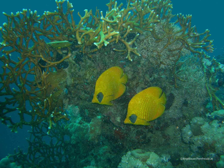 Unterwasser_Ägypten_(95).jpg