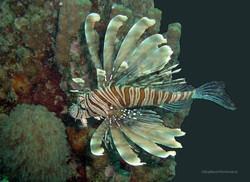 Unterwasser_Ägypten_(55).jpg