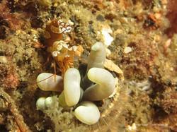 Sulawesi 154