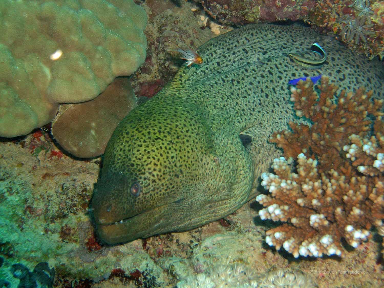 Unterwasser_Ägypten_(60).jpg