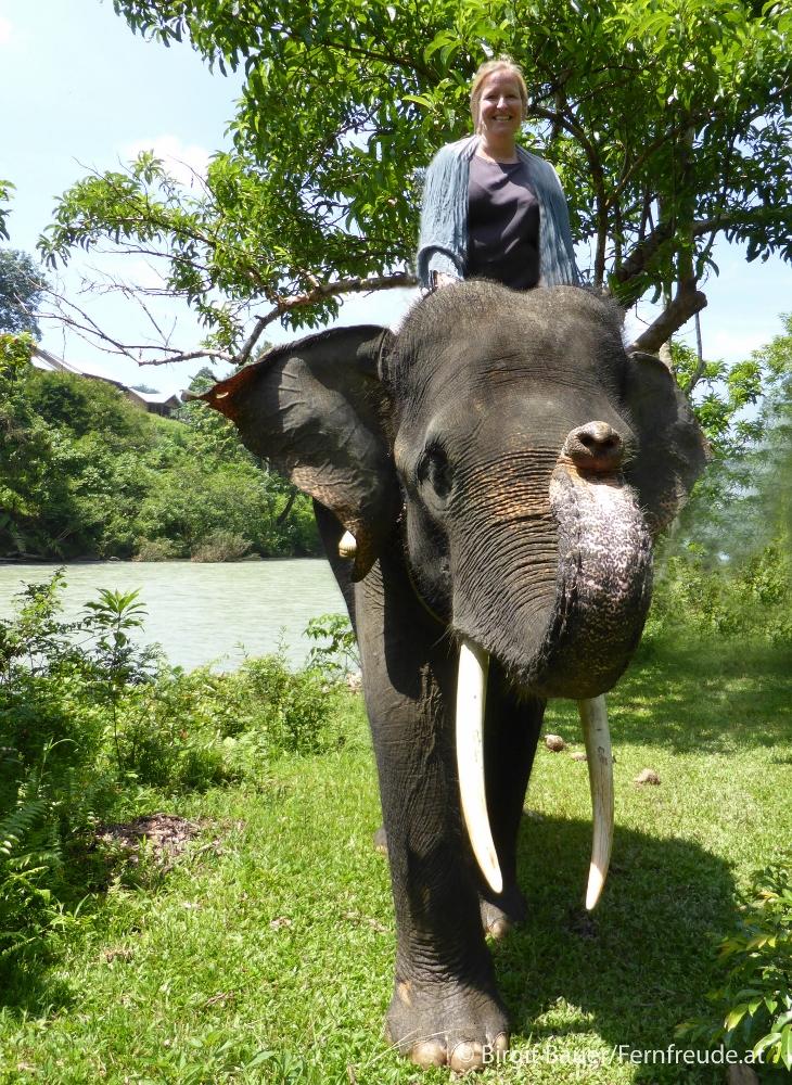 Hoch zu ... Elefant!