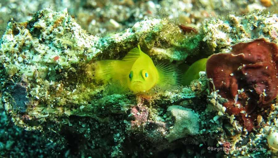 Sulawesi 054