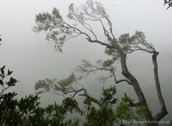 Regenwald Stimmung