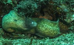 Sulawesi 056