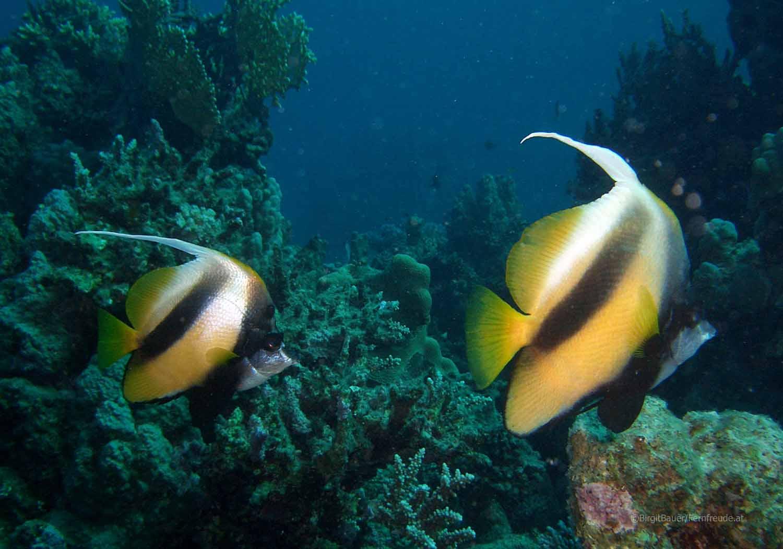 Unterwasser_Ägypten_(57).jpg