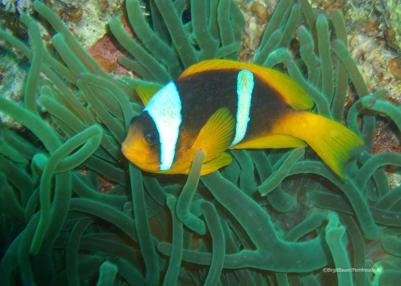 Unterwasser Ägypten (100).jpg