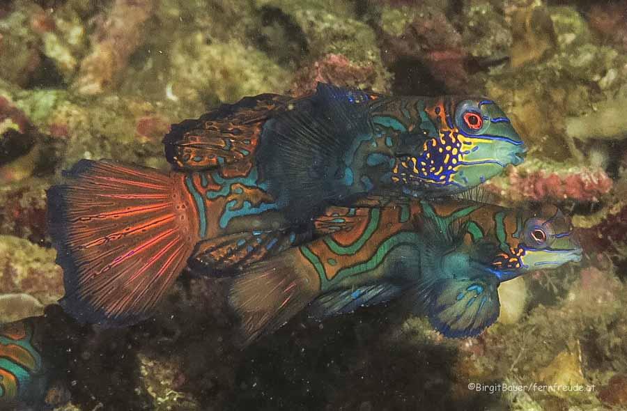 Sulawesi 032
