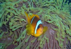 Unterwasser_Ägypten_(63).jpg