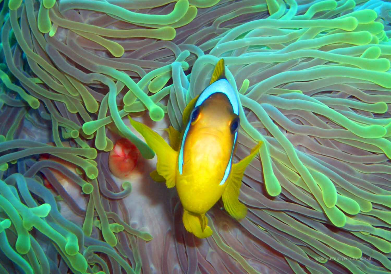 Unterwasser_Ägypten_(64).jpg