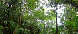 Quetzal-Biotop