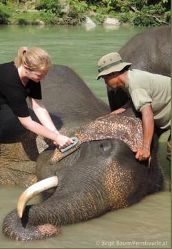 Elefantenwaschung