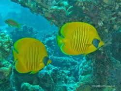Unterwasser_Ägypten_(90).jpg