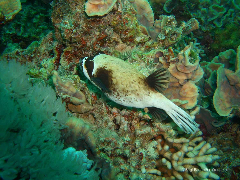 Unterwasser_Ägypten_(81).jpg