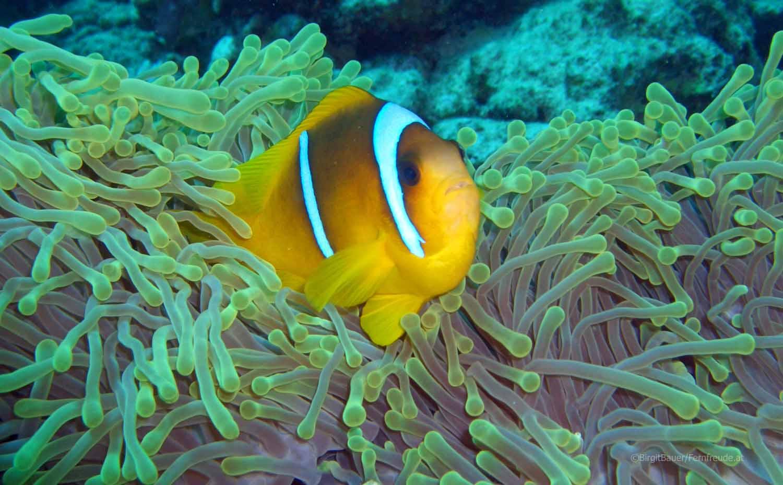 Unterwasser_Ägypten_(62).jpg