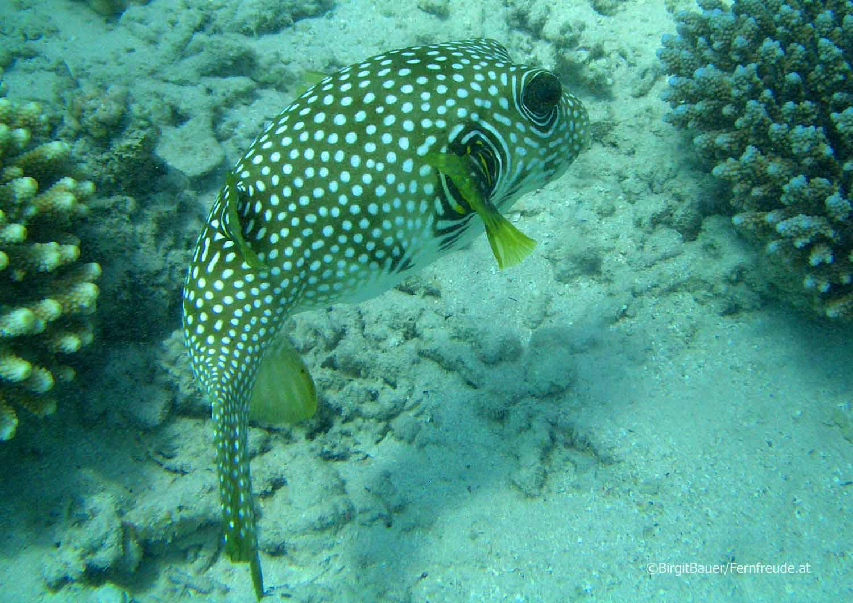 Unterwasser_Ägypten_(79).jpg