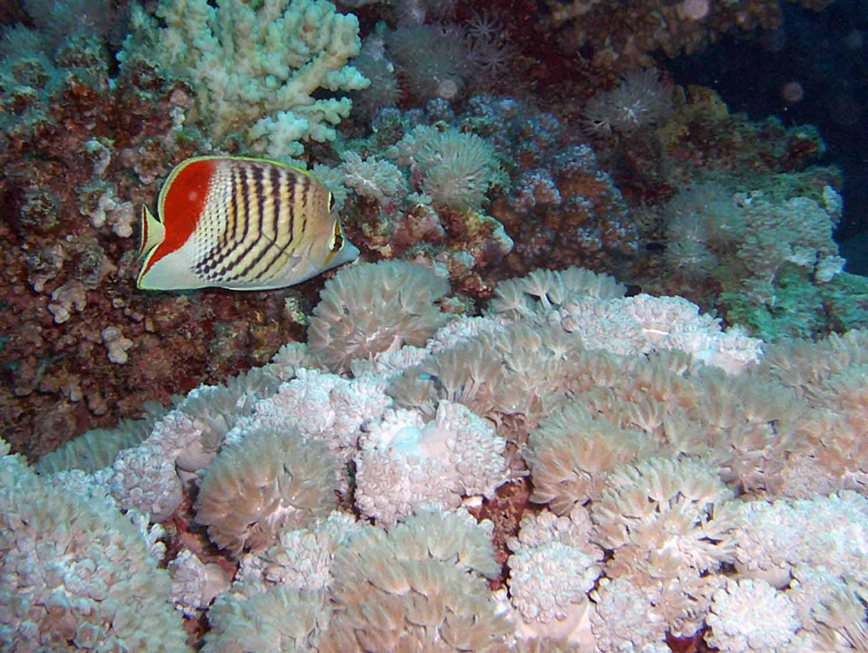 Unterwasser_Ägypten_(58).jpg